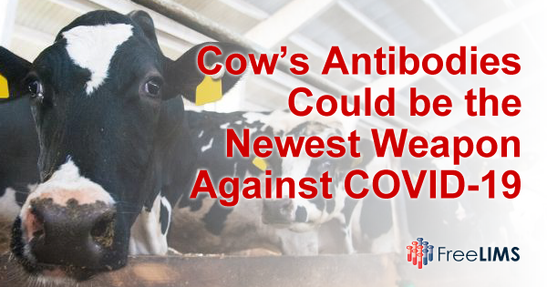 Cow's Antibodies Could be the Newest Weapon Against COVID-19