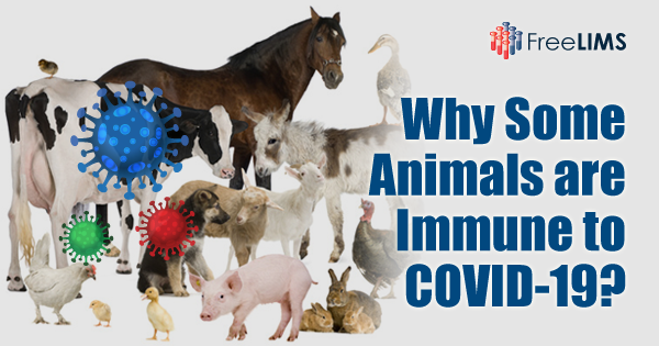 Why some animals are immune to COVID-19
